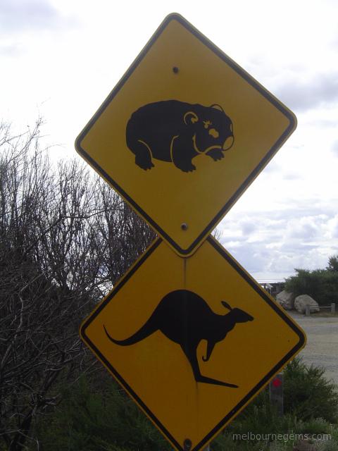 Wombat and Kangaroo Autralian road sign