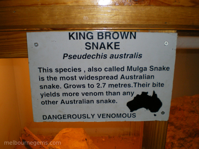King Brown Snake description