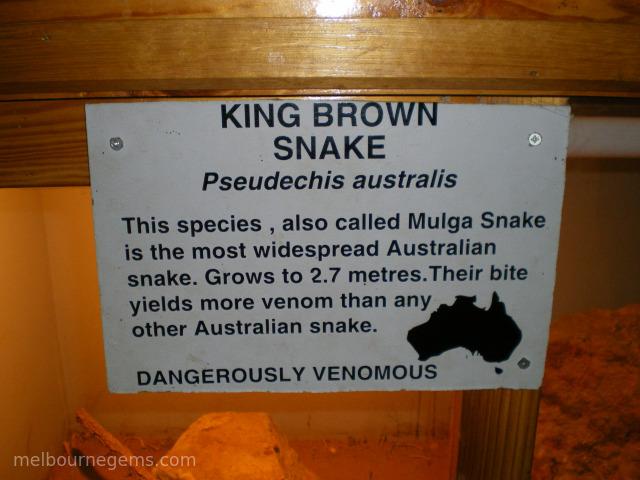 King Brown Snake description