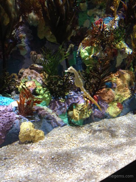 Seahorse at Melbourne Aquarium