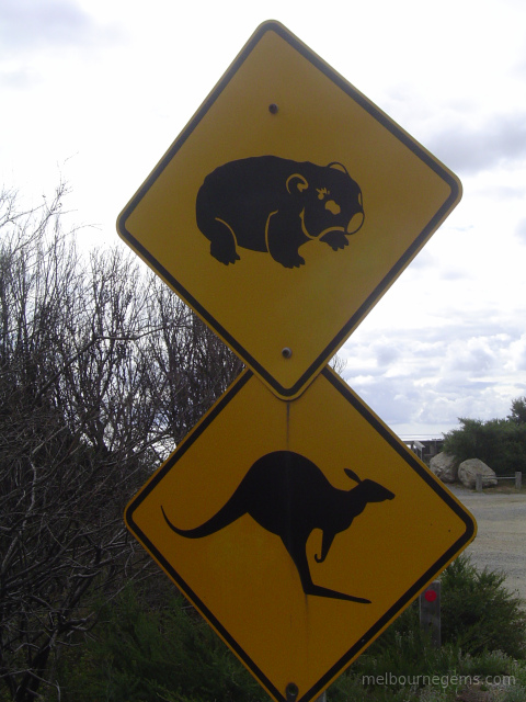 Wombat and Kangaroo Autralian road sign